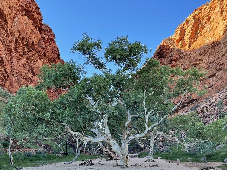 The Painted Desert: Art Safari, Northern Territory